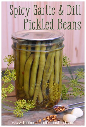 Spicy Garlic & Dill Pickled Beans