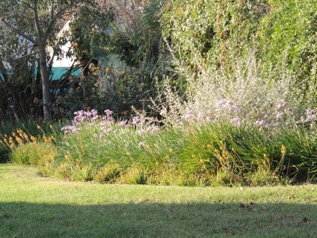 Mi jardín. Fines del verano.