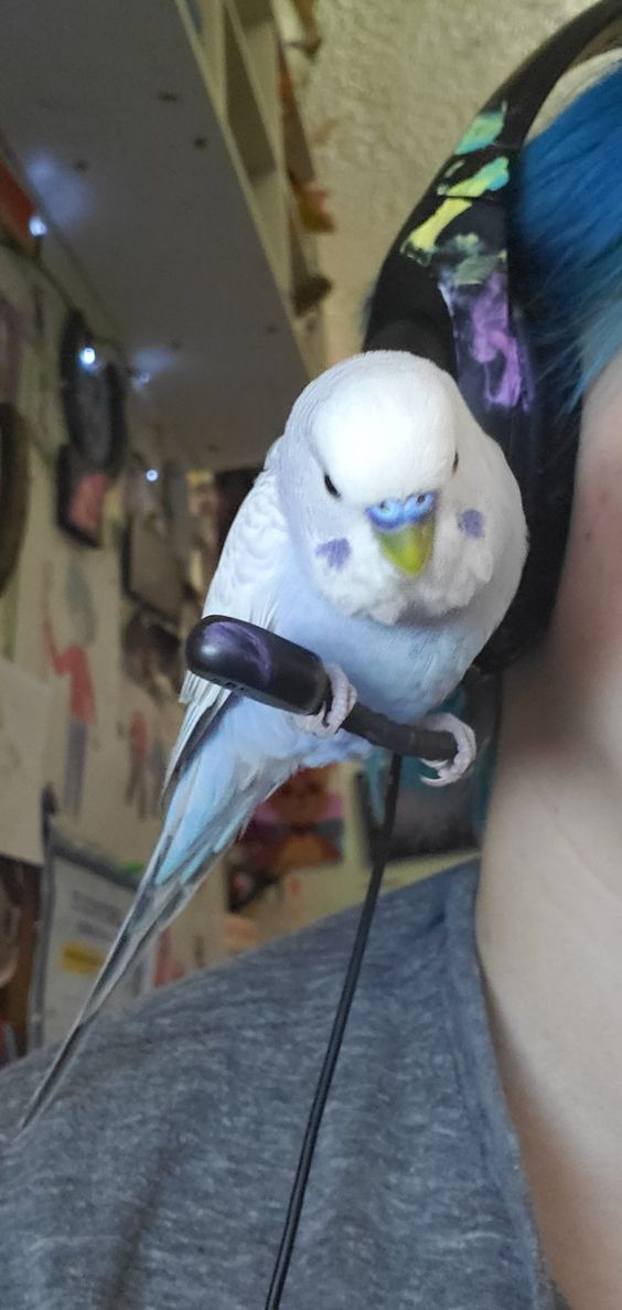 a birb sitting on a microphone and jugeing you for your life choices
