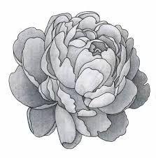 Resultado de imagen para peony tattoo black white