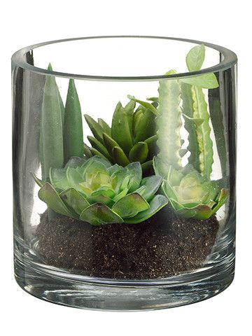 "Succulent Garden 5.5"" in Glass Vase Green Burgundy:"