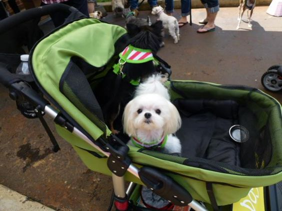 The Dogger stroller in action - look at that face, sooooo cute!