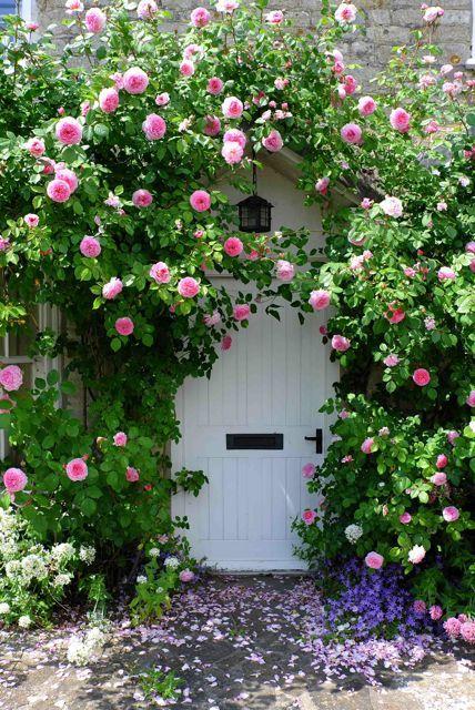 De superbes roses entourent une porte blanche.: