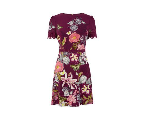 Oasis, BOTANY LACE DRESS Berry 0