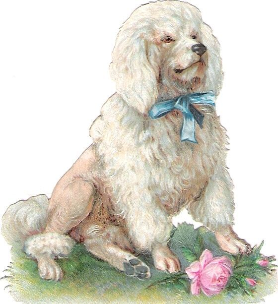 Oblaten Glanzbild scrap die cut chromo Pudel  8cm Hund dog poodle Rose Masche: