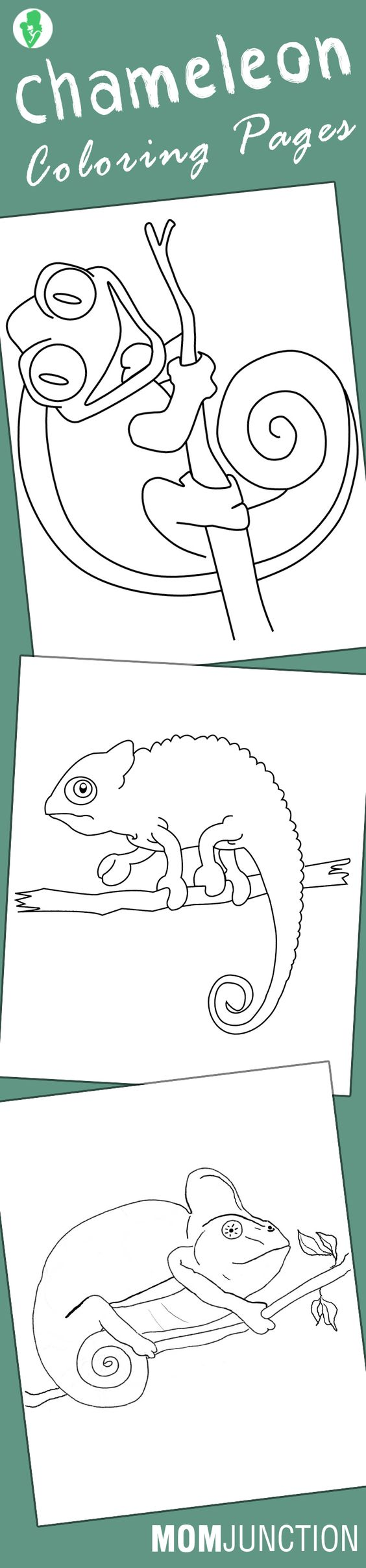 chameleon coloring pages free printables coloring