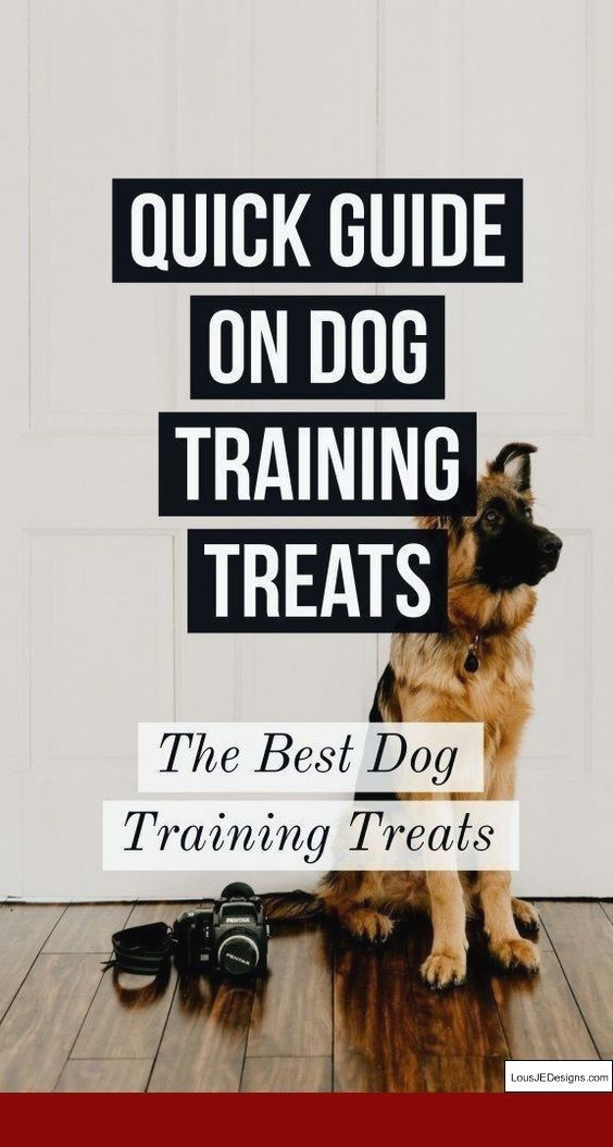 How To Train A Rescue Dog Not To Bitehow To Train A Rescue Dog Not