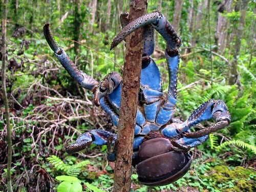He is so 'crabby ' cause he is feeling 'blue '