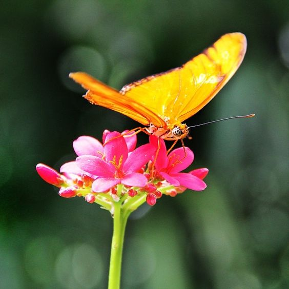Don't think we'll ever get tired of taking pictures of butterflies. #bloomsandbutterflies