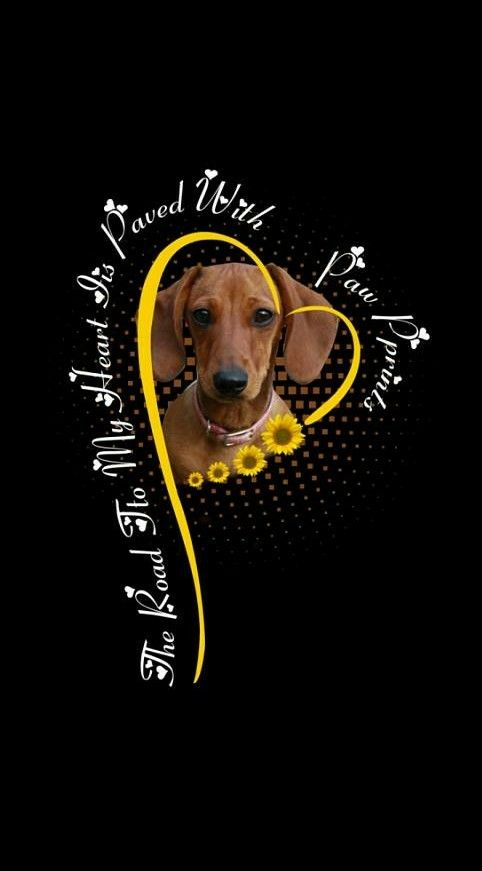Dachshund Puppies Quotes Best Dog Quotes Missing Dog Quotes