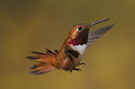 I like this birds pose and tail