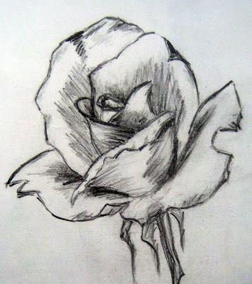 Esboço de uma Rosa