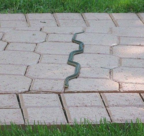 snake snake snake hahahahhaha