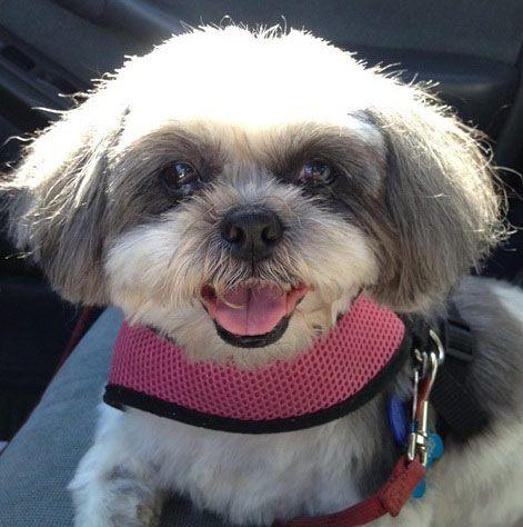 My dog Honey. Elinor, Sarasota, FL  - 3/23/2015