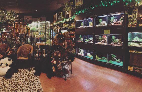 Reptile Room At Bridges Pets In Snohomish Wa Zilla Reptile Room Reptiles Pets