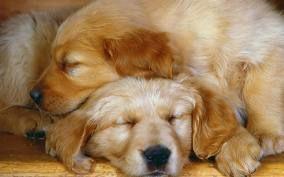 nap buddies.