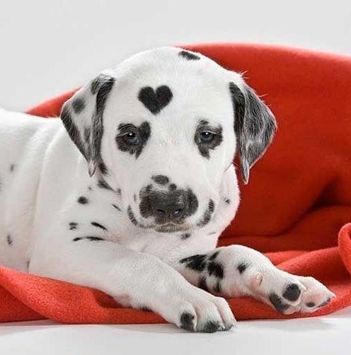 Não é todo dia que a gente vê uma pintinha de coração, né?! <3