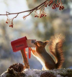 Il a suivi des écureuils avec son appareil photo pendant 6 ans et voici ses 33 meilleures photos