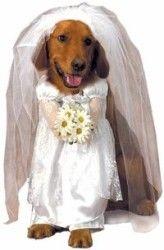 Pet Wedding Bride Dog Costume