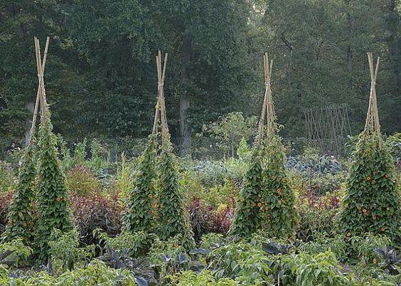 Recycler Les Tuteurs En Bambous Articles