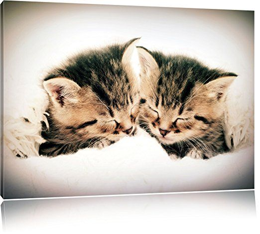 katzen herzform bild auf leinwand xxl riesige bilder fertig gerahmt mit keilrahmen kunstdruck wandbild ra art prints photographic watercolor cat extra groß 80x120