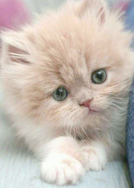 Pin On Kittens