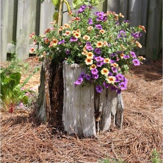 Old tree stump use for the home pinterest old trees for Tree trunk uses