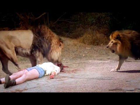 Leões Selvagem atacando Humanos chocante #COMPARTILHE