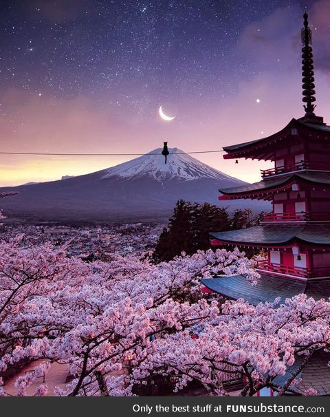 Funsubstance Fresh Japan Landscape Cherry Blossom Japan Aesthetic Japan