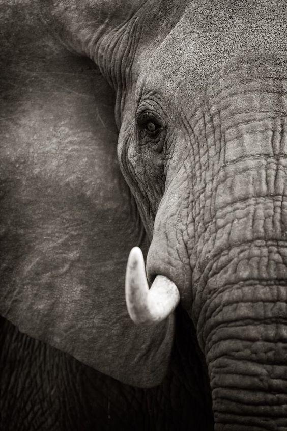 Incredible photo.. Love love love elephants
