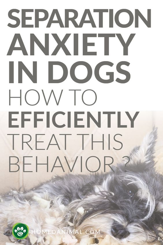 What are the Causes of Separation Anxiety in dogs? How to treat this behevior? Every dog owner should know more about this issue. Find the answer in here.