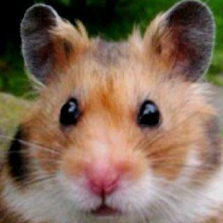 Cute hamster= its shubba dee dee
