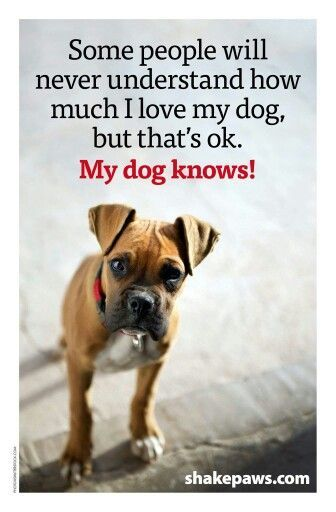 Some people will never understand how much I love my dog, but that's ok. My dog knows! <3