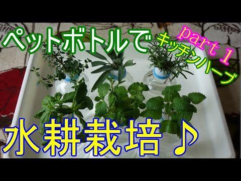Pin On Kitchen Garden 家庭菜園 Gardening