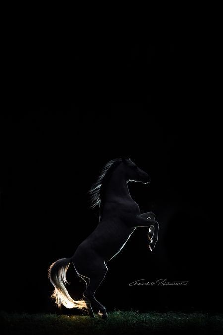 Dark Horse Photo By Claudia Rahlmeier National Geographic Your Shot Horse Wallpaper Pretty Horses Horse Photos