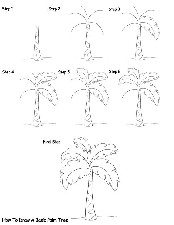 palm tree with coconuts drawing - photo #34