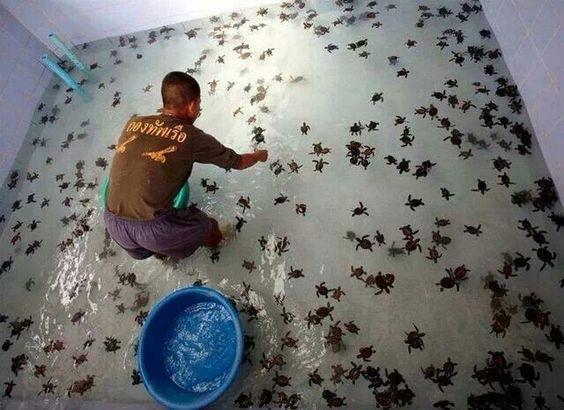 I want a turtle farm !!!!