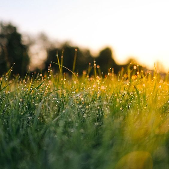 Papers.co wallpapers - nm66-lawn-green-nature-sunset-light-bokeh-spring - http://papers.co/nm66-lawn-green-nature-sunset-light-bokeh-spring/ - bokeh, flower