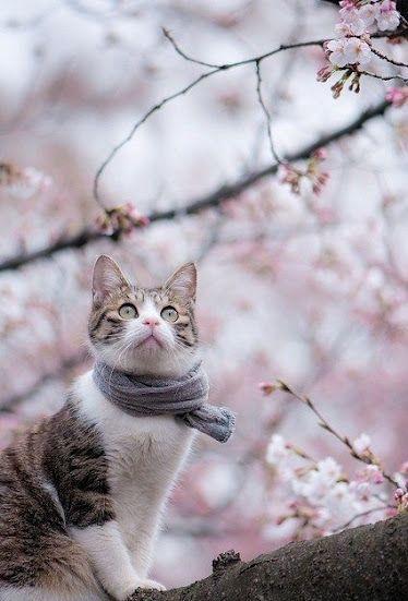 Il gatto con la sciarpa...