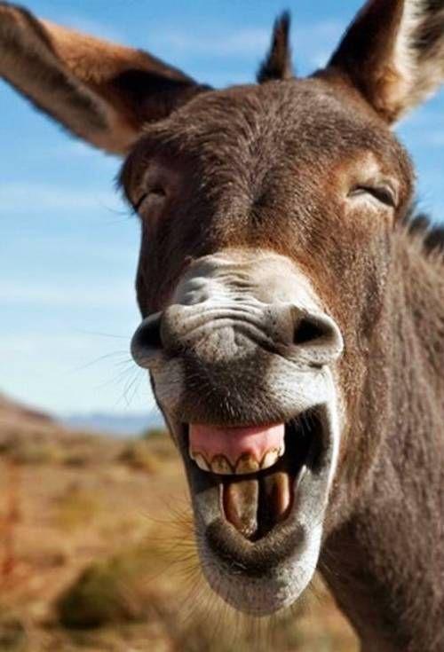 Tiere Bilder Arivleri Tiere Blog In 2020 Lustige Tiere Lachelnde Tiere Witzige Tiere