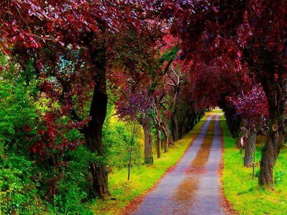 Beautiful Pathway In Spain