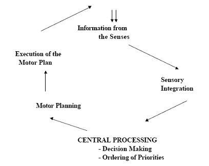Dyspraxia praxis developmental dyspraxia developmental for Motor planning disorder symptoms