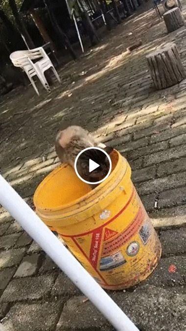 Cachorro está procurando algo no lixo
