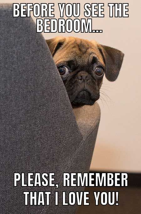 Funny Dog Meme With A Worried Looking Pug Dogs Explore Pinterest Dogs Explore Pinterest Dog Quotes Funny Funny Dog Captions Funny Dog Memes