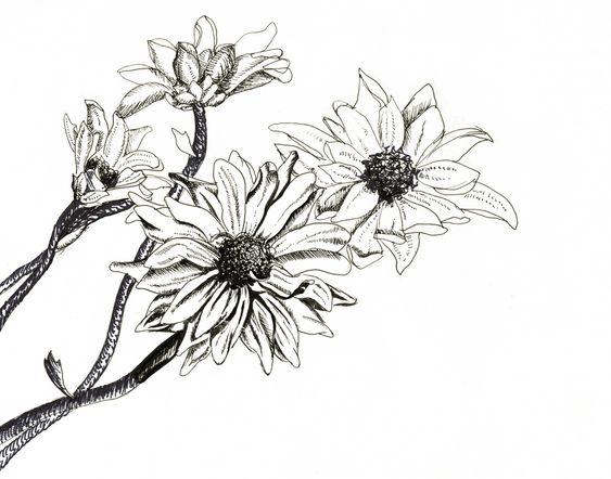 Art pen and ink flower pens flower drawings search pen drawings ideas