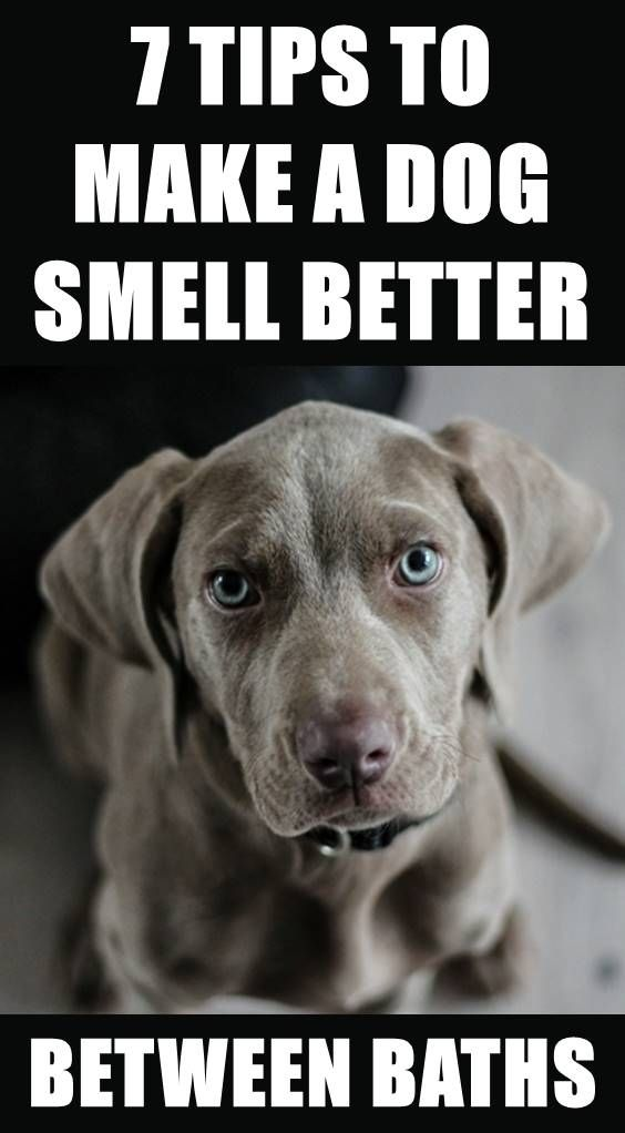 Pin By Cindy Abner On Toby In 2020 Dog Smells Stinky Dog