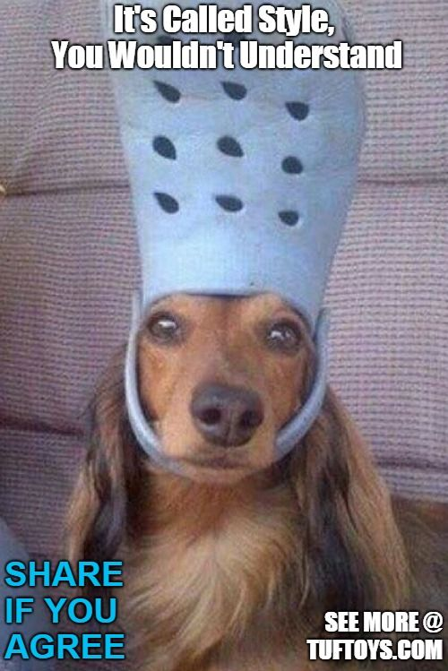 Funny Dog Memes Part 6 Dog Quotes Funny Funny Dog Memes Dog