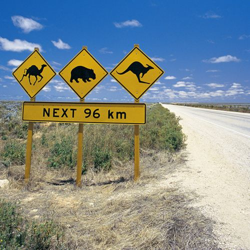 """""""road signs in Australia by the beach!"""" Seriously someone is having a lend of someone. Our wild camels are to be found inland not near the coast (beach)"""