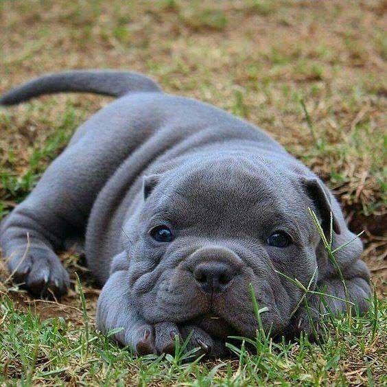 Pin By Sam Larocca On Wagging Tails Cute Animals Baby Animals Cute Puppies