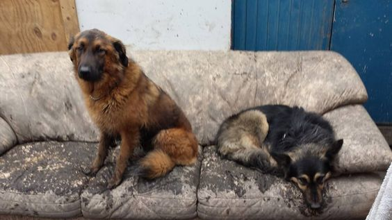 Dirty Katey and Shera at doggy day care  Both are rescue dogs from RSDR (Rudozem Street Dog Rescue)